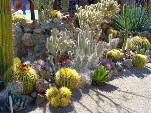 cactus-desert
