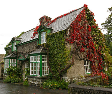 House on roadside covered with ivy, Republic of Ireland